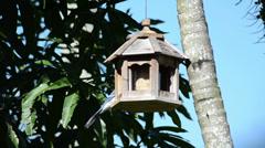 Blue jay (Cyanocitta cristata) eating on the wooden bird feeder 02 Stock Footage