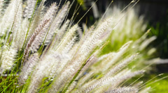 Native Grass Plants Stock Footage