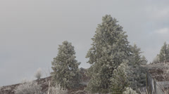 Stock Video Footage of weather, soft afternoon early winter sun on hoar frost on tree, creep in