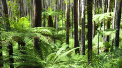 Tree Ferns swaying in a dense forest Stock Footage
