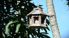 Mourning dove (Zenaida macroura) eating on the wooden bird feeder 02 Stock Footage