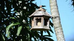 Mourning dove (Zenaida macroura) eating on the wooden bird feeder Stock Footage