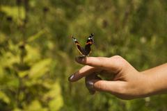 Beautiful butterfly on human finger - stock photo