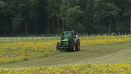 Stock Video Footage of Tractor with mulching attachment clearing land from invasive Ragwort