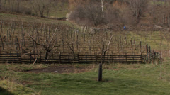 Blackberry orchard in the early spring Stock Footage