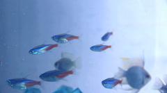 Pieni kala akvaariossa Arkistovideo