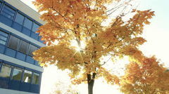 East Asia Institute Ludwigshafen during autumn - stock footage