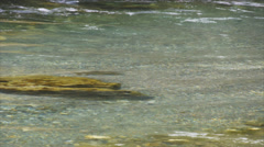 Nz brown trout in river Stock Footage