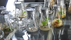 genetic engineering - stock photo