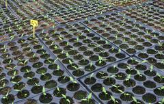 little plants - stock photo