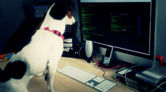 A cyber dog Stock Footage