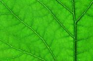 Green leaf macro Stock Photos