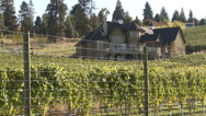 Stock Video Footage of vineyards and a nice house, just before harvest