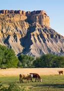 Badlands Cattle Stock Photos