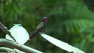 Stock Video Footage of Hummingbird in Monte Verde Costa Rica