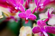 Stock Photo of pink orchid flowers on leaves background