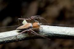 spider. close up. - stock photo
