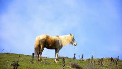 Gipsy horse grazing against the blue sky horizon Stock Footage
