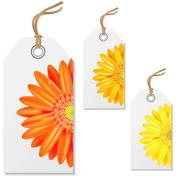 Sale tags with gerbers Stock Illustration