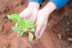 Growing a tree in the forest for giving life to the earth Stock Photos