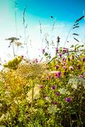 Beautiful view in summer flower Stock Photos