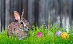 Bunny and Easter eggs in the grass - stock photo