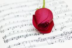 Single red rose on musical notes page - stock photo