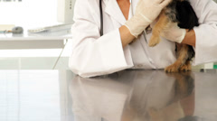 Happy vet checking a yorkshire terrier - stock footage