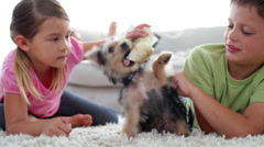 Siblings playing with puppy and bone with their mother reading on the sofa Stock Footage