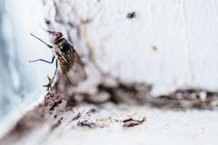 Nasty housefly in a window Stock Photos