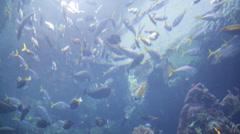 The deep blue sea Aquarium Under Water Stock Footage