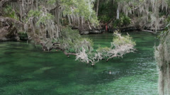 River Blue Spring State Park Florida HD 1935 Stock Footage