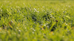 Fresh spring grass in sunlight Stock Footage