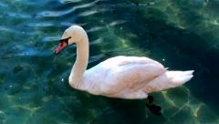 Listened to the White Swan on a lake Stock Footage