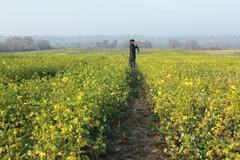 Rapeseed & a photographer - stock photo