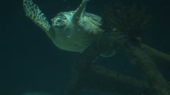 A loggerhead sea turtle swimming at night. Stock Footage