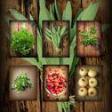 Stock Illustration of Vintage collage of fresh herbs