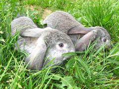 Hares in the grass Stock Photos