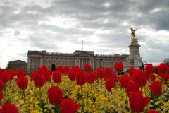 Buckinghamin palatsi kukat kukkivat kuningattaren puutarha, Lontoo, Englanti Kuvituskuvat