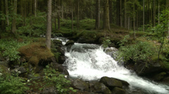 Pure fresh water in forest Stock Footage