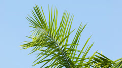 Swaying palm frond on blue sky background Stock Footage