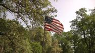 Stock Video Footage of US-American Flag-Oak Tree Forest