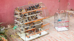 Caged birds for sale (black-headed munia). phnom penh, cambodia Stock Footage