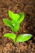 Stock Photo of New life concept - green seedling growing out of soil