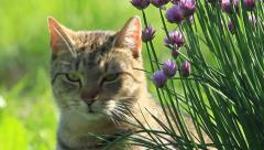 Cat in a garden Stock Footage