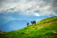 Stock Photo of horses on green valley in mountains rural landscape with moody sky clouds
