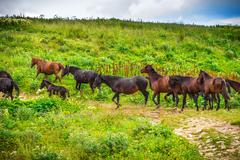 Horses herd running on green valley in mountains rural landscape farm animals Stock Photos