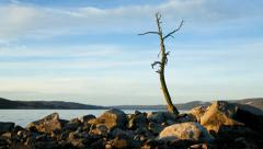 One Old Tree and Rocks 4K timelapse Stock Footage