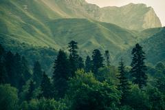 coniferous deep forest in mountains caucasus beautiful landscape - stock photo