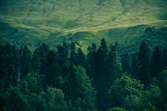 Coniferous deep forest in mountains caucasus beautiful landscape Stock Photos